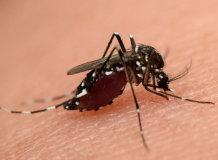 Что делать если мошка или комар укусил в губу: правила обработки и снятия отека